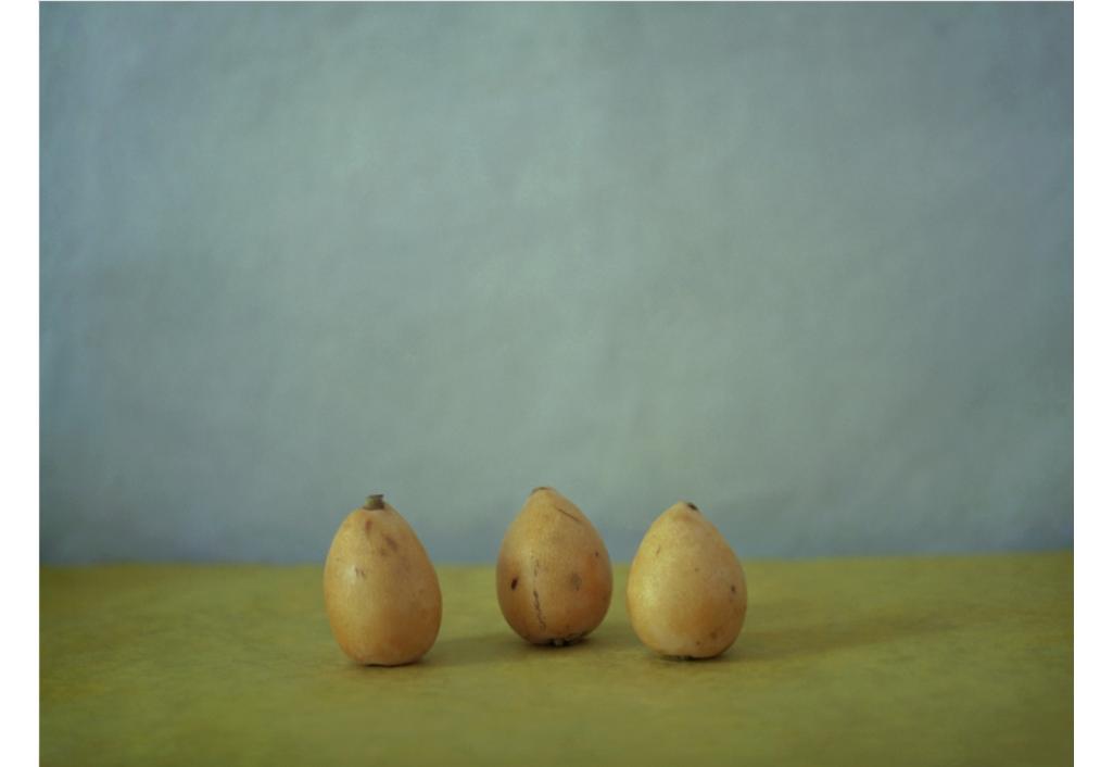 EDLS - Trois nèfles, un matin d'été