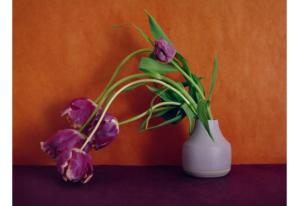 Bouquet, Tulipes Perroquets