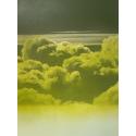 Venus Series : Ozone 7