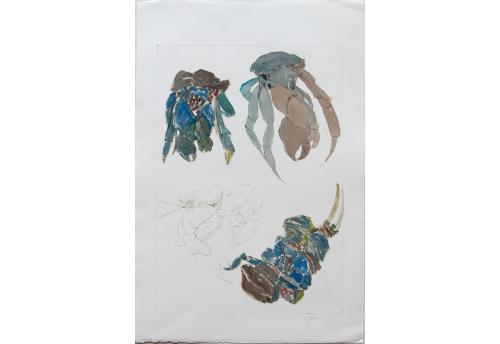 Crabe 1