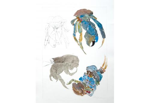 Crabes 2