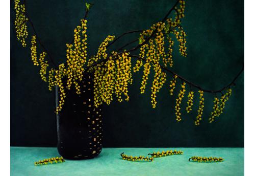 Bouquet, Grappes Jaune