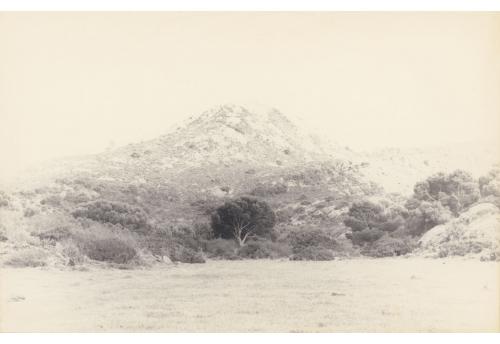 L'arbre qui cache la montagne