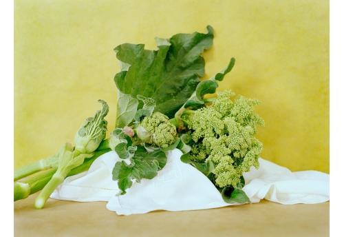 Bouquets - Rhubarbe 1