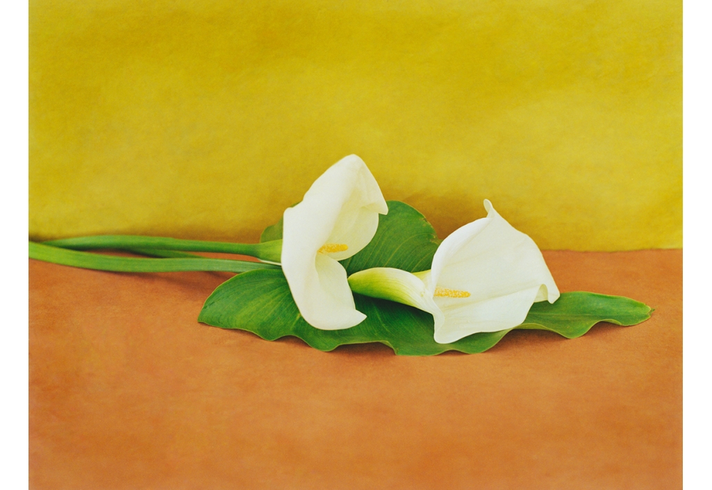 Bouquets - Arums