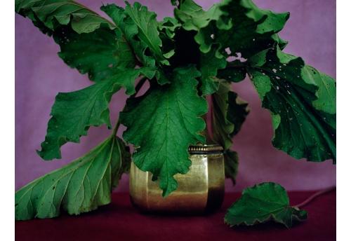 Bouquets - Rhubarbe 2