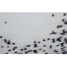 04015 Flight Zoom