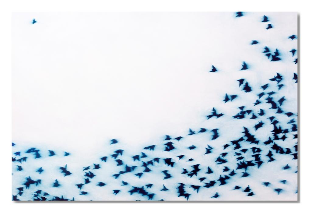 Flight-eberhard-ross-zeuxis