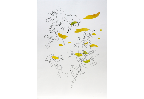 Hélianthe Engraving Isabelle Beraut Zeuxis