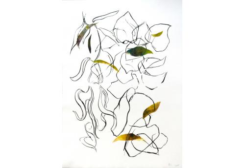 Hélianthe 3 Engraving Isabelle Beraut Zeuxis