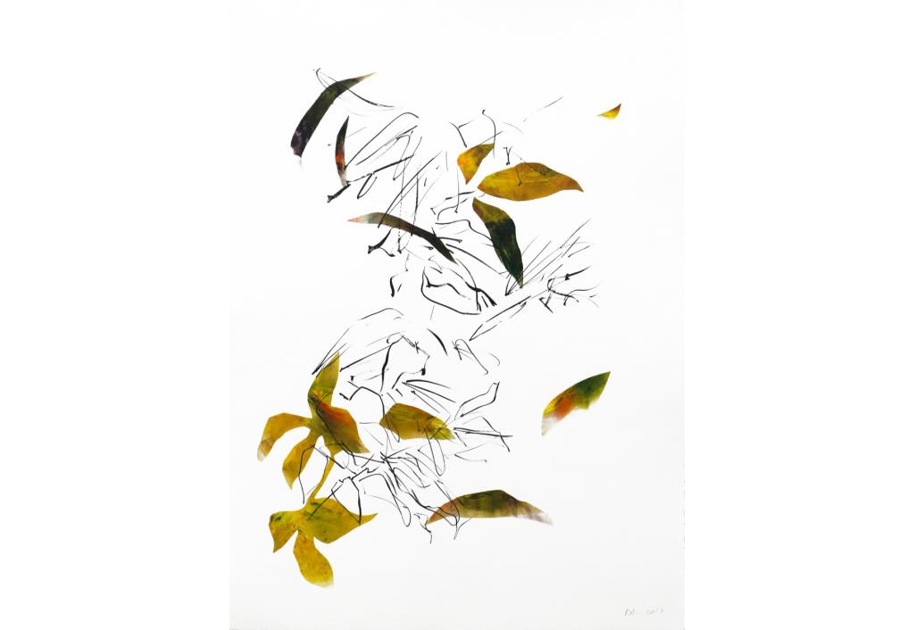 Hélianthe 5 Engraving Isabelle Beraut Zeuxis