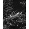 Escalier Scpo Photograph Bertrand Clech Zeuxis