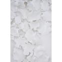 Forêt blanche II